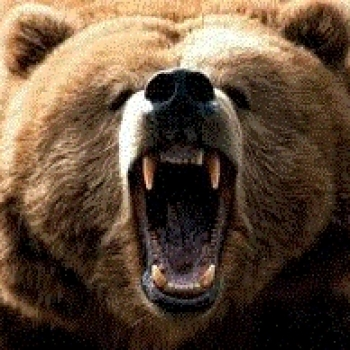 Stefano The Bear